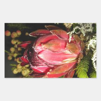 プロテアの花 長方形シール