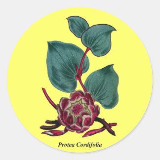 プロテアCordifolia ラウンドシール