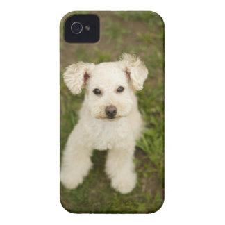 プードル(白い) Case-Mate iPhone 4 ケース