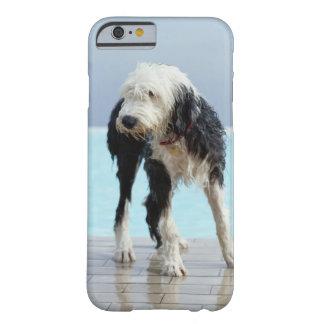 プールによるぬれた犬 BARELY THERE iPhone 6 ケース