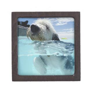 プールの犬の水泳 ギフトボックス