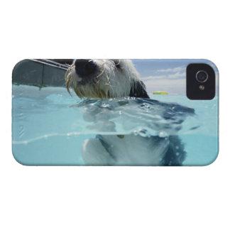 プールの犬の水泳 Case-Mate iPhone 4 ケース