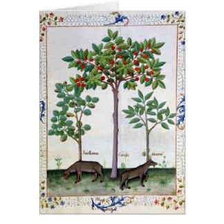 ヘイゼルナッツブッシュおよび桜 カード