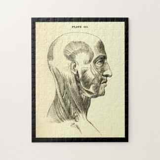 ヘッドのヴィンテージの解剖学|筋肉(1852年頃) ジグソーパズル