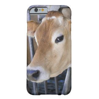 ヘッドロックの頭部を持つジャージーの乳牛 BARELY THERE iPhone 6 ケース