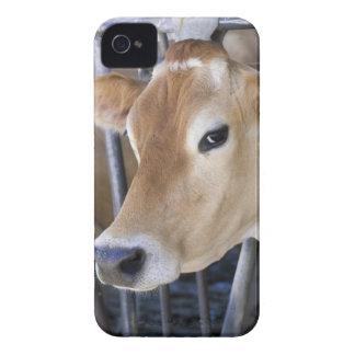 ヘッドロックの頭部を持つジャージーの乳牛 Case-Mate iPhone 4 ケース