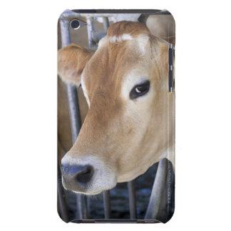 ヘッドロックの頭部を持つジャージーの乳牛 Case-Mate iPod TOUCH ケース