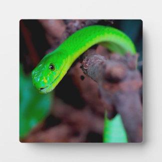 ヘビのスタイル フォトプラーク