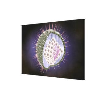 ヘルペス・ウイルスの構造 キャンバスプリント