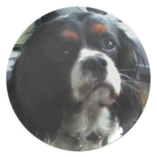 ヘンリーの無頓着なチャールズ王スパニエル犬のプレート プレート
