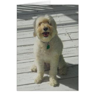 ベイリーデッキ-カードで提起している美しい犬 カード
