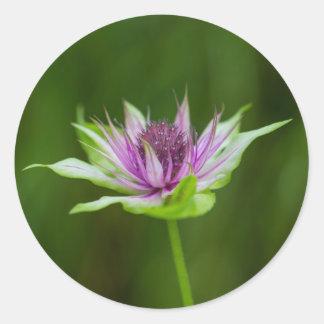 ベズルの蜂香油のベルガモット油の野生の花の円形のステッカー ラウンドシール