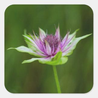 ベズルの蜂香油のベルガモット油の野生の花の正方形のステッカー スクエアシール