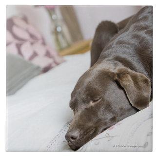 ベッドで眠るチョコレートラブラドル タイル