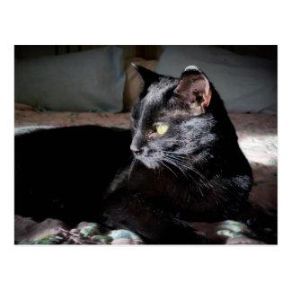 ベッドの郵便はがきの黒猫 ポストカード