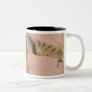 ベッドカバーで広がる銀製の虎猫 ツートーンマグカップ