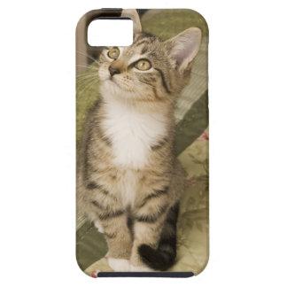 ベッドカバーの銀製の虎猫 iPhone SE/5/5s ケース
