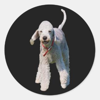 ベドリントン・テリア犬のかわいく美しい写真 ラウンドシール