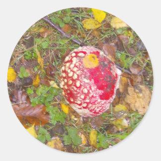 ベニテングタケの菌類 ラウンドシール