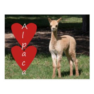ベビーのアルパカ愛郵便はがき ポストカード