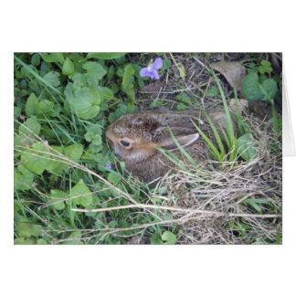ベビーのウサギの空白のなカード カード