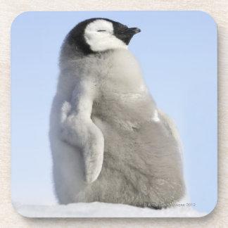 ベビーのコウテイペンギン、雪の丘の島 コースター