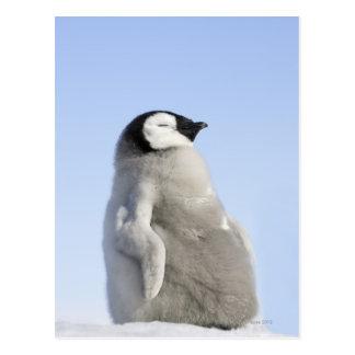 ベビーのコウテイペンギン、雪の丘の島 葉書き