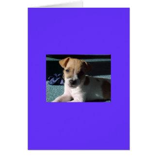ベビーのジャッキのラッセルテリア カード