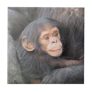 ベビーのチンパンジー タイル