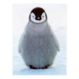 ベビーのペンギン ポストカード