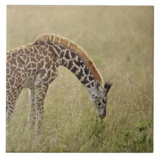 ベビーのマサイ族のキリン、Giraffaのcamelopardalis タイル