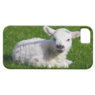ベビーの子ヒツジのヒツジのかわいい自然動物の写真 iPhone SE/5/5s ケース