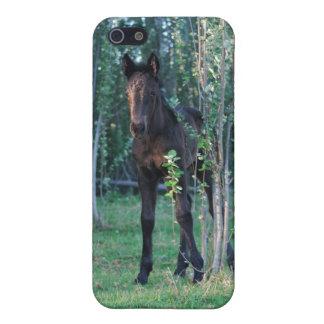 ベビーの子馬およびポプラの苗木 iPhone 5 ケース