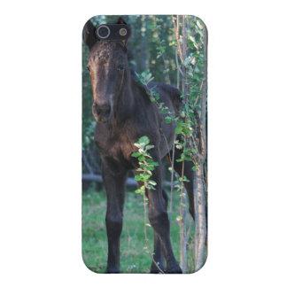 ベビーの子馬およびポプラの苗木 iPhone 5 COVER