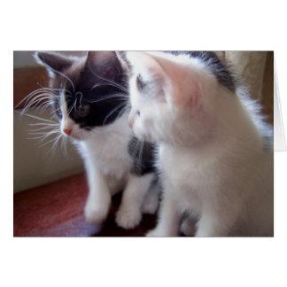 ベビーの猫ちゃん グリーティングカード