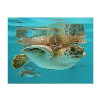 ベビーの緑のウミガメの水泳 キャンバスプリント