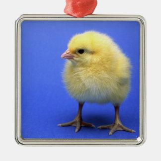 ベビーの鶏 メタルオーナメント