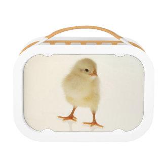 ベビーの鶏 ランチボックス