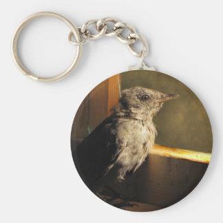 ベビーのCatbird キーホルダー