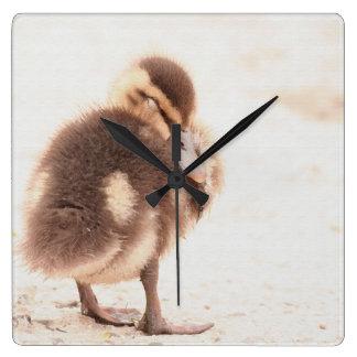 ベビーは子ガモの鳥の野性生物動物を引込めます スクエア壁時計