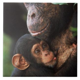 ベビーを育てっているチンパンジーの母 タイル