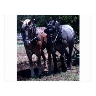 ベルギーのばん馬 ポストカード