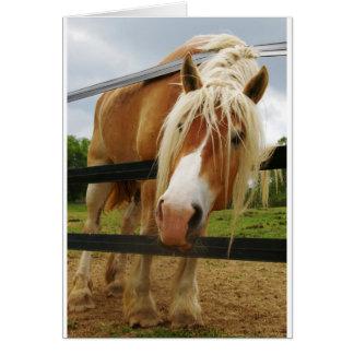 ベルギーのばん馬、得られたにんじんか。 カード