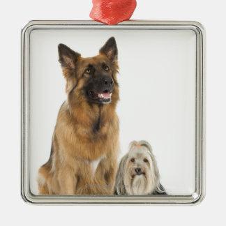 ベルギーの羊飼いおよびシーズー(犬)のTzuスタジオのポートレート メタルオーナメント