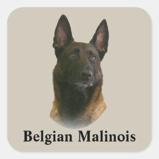 ベルギーのmalinois スクエアシール