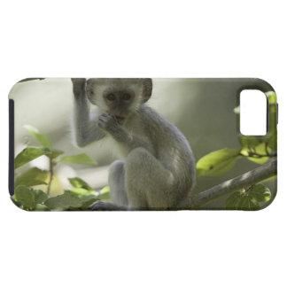 ベルベットモンキー、ジンバブエ iPhone SE/5/5s ケース