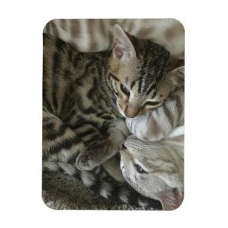 ベンガルの子ネコの磁石 マグネット