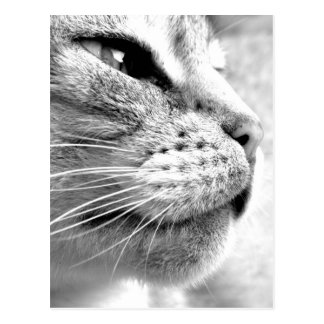 ベンガル猫 ポストカード