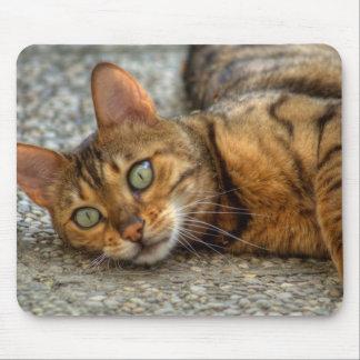 ベンガル美しい猫 マウスパッド