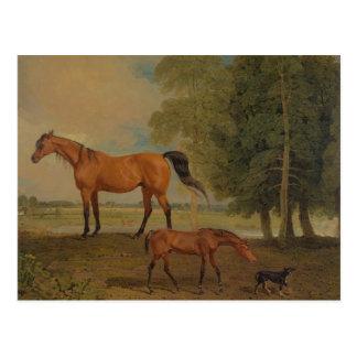 ベンジャーミンマーシャル-子馬を持つBroodmare ポストカード